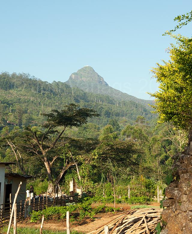 Adams Peak (Sri Prada in the distance)