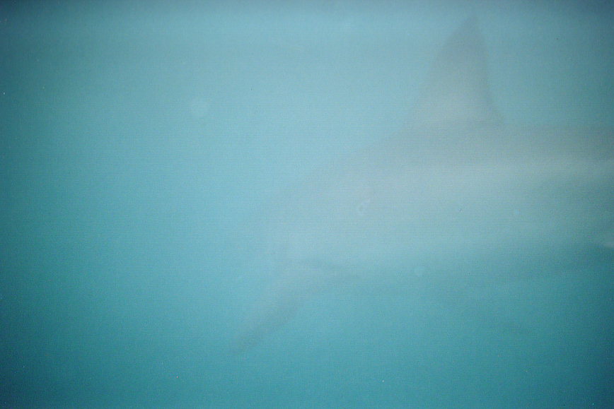 View from the Shark Cage